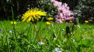 Pożyczka na aranżację ogrodu
